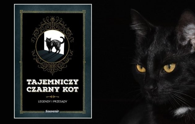 Recenzja książki Tajemniczy czarny kot. Kupisz ją w TaniaKsiazka.pl