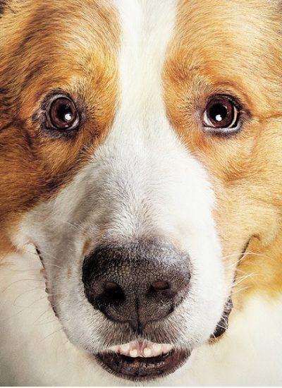 Był sobie pies 2 - kontynuacja bestsellerowej historii