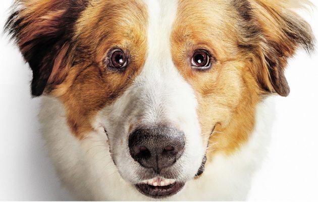Był sobie pies 2 - kup na TaniaKsiazka.pl